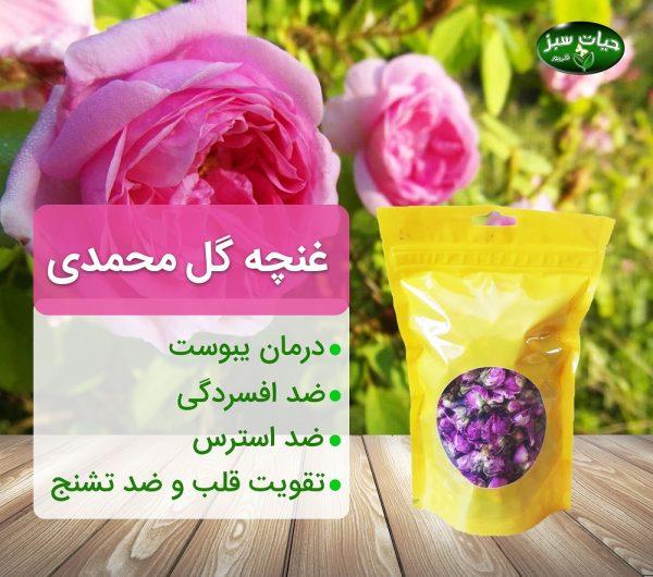 غنچه-گل-محمدی